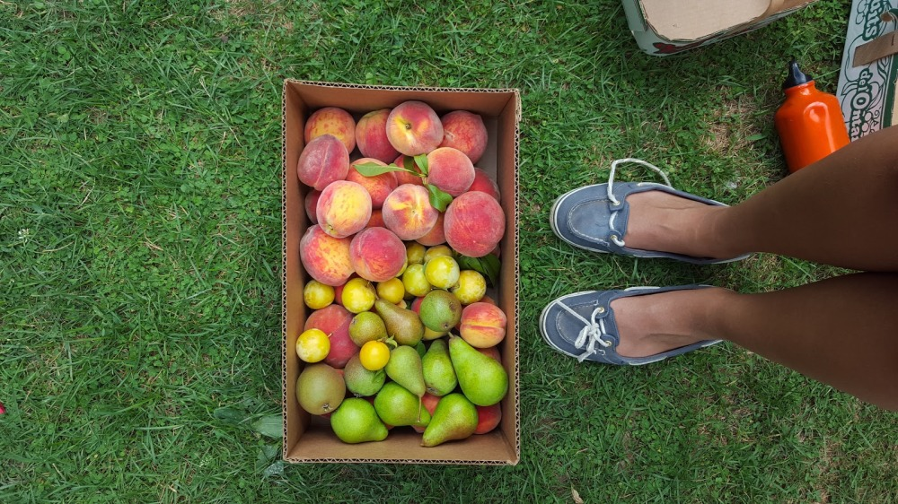 peachpicking